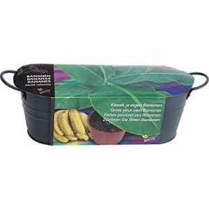 Astuceo Kit jardinière pour bananier