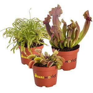 BOTANICLY | Plante de marais – Swampworld – mélange de plantes carnivores + pot coloré | Hauteur: 15 cm