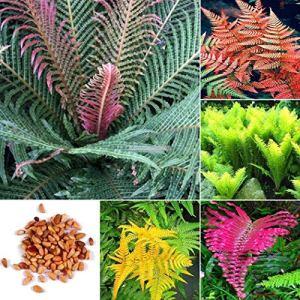 AGROBITS Type11: 100pcs Multicolor fougÚre Jardinerie Balcon plantes grimpantes Er99 de e