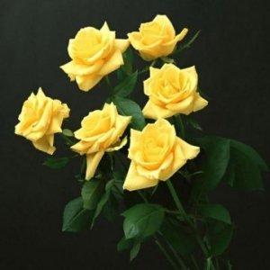 Souked 20 Graines PCS Jaune Rose Fleur Good Fortune fleurs