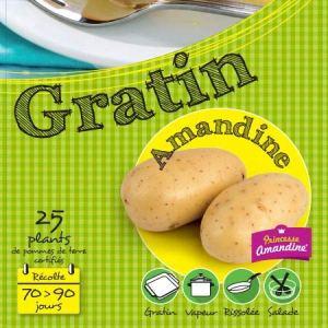Amandine 25 Plants de pomme de terre