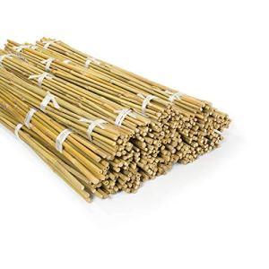 casa pura Tuteurs pour Plantes – Canne Bambou | Tige de Bambou Naturelle pour Légumes, Tomates, Etc | Piquet de Qualité Supérieur | Lot de 60 Pièces | Longueur 180 cm