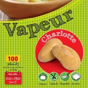 Charlotte 100 Plants de pomme de terre