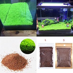 Graines pour plantes d'aquarium large double leaf Voir image