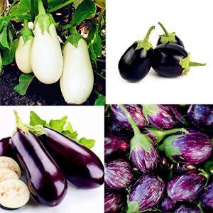 Kisshes Seedhouse – 200pcs Bio Aubergine Graine Légumes Végétales Biologiques Graines Violet Blanche Aubergine Graine Mixtes Maison Jardin Bonne Semences Potageres