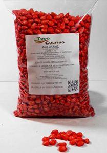 Maïs hybride pour semer de cycle moyen-long (600) non transgénique. 5 kg