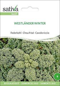 Charbon de plumes/Charbon vert Westländer Hiver | Graines de charbon bio
