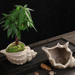 WBFN Pots de Fleurs Shell Pot jardinières de Fleurs Creative poterie en céramique Grossier Forme Succulent Plant Pot Holder Fairy Garden Cactus Flower Pots Planteur (Color : 01)