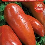 Semillas Batlle Semences de tomates Andine Cornue des Andes