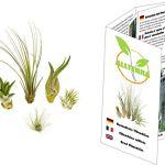5 différentes mini Tillandsia Mix, plantes d'intérieur