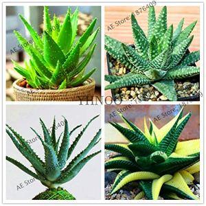 Generic Frais 100 pcs Aloe vera graines de plantes pour Plantation Mixte