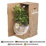 Plante d'intérieur de Botanicly – Palmier à cannes en un cachepot marron haut comme un ensemble – Hauteur: 160 cm – Rhapis Excelsa
