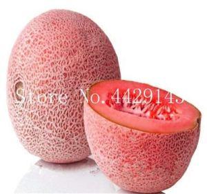 Generic Fresh 50 pcs graines de cantaloup pour planter du rose