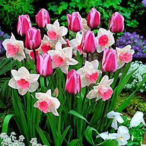 Mix Tulipa & Narcissus»Perfect Harmony» | 25 bulbes de tulipes et narcisses | Bulbes à floraison précoce | Plantes fleuries vivaces | Ø 11cm