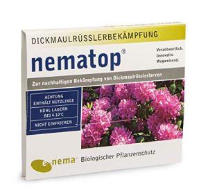NemaTop Nématodes HB (Heterorhabditis bacteriophora) pour lutter contre otiorhynques 25millions pour 50m²