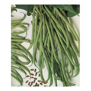 gondian – Graines de Haricot Braimar – sac de 5 kgs