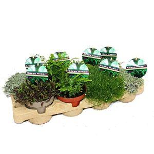 Green Hobbit Mix – Set de 8 plantes inhabituelles de mousse et de fougère, rustique