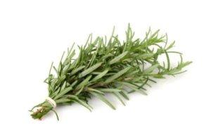 55mg certifié Graines de Romarin ~ 40 comte vivace jardin Fines herbes savoureuses