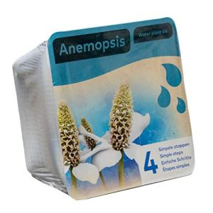 Kit complet pour plantes aquatiques – Anémopsis