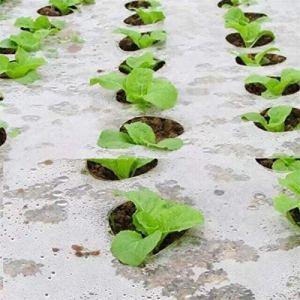 ling 5~50m 5 Largeur 95cm Trous De Paillis en Plastique Noir, Plantes De Légumes Agricoles Cultivez Un Film, De La Serre Gardez Un Film De PE Perforé Chaud À l'herbe (Size : 15 Meters)