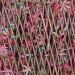 Tenax Haie artificielle avec feuilles treillis extensible en saule, Divy 3D X-Tens Red Acer, 1 x 2 m, rouge/vert