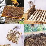1 x Coupe Apicole en Acier Inoxydable,1x Outil de Cadre de Ruche d'abeille,Pelle à Miel d'abeille,Grattoir à Miel pour Équipement d'outil d'apiculture,Équipement d'outil d'apiculture en Nid d'abeille