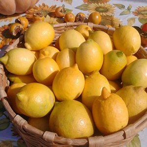 9 kg – Citron non traité – Garantis niche extensible – Calabria