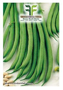 180 c.ca haricots rampants mangeoire verte bobis blé blanc – phaseolus vulgaris – fabriqué en Italie – haricots verts grimpants – blé blanc