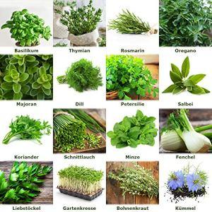 Mélangez/fixez»Herb Garden» 16 x 50 graines des herbes les plus populaires du Portugal / 100% naturel (Pas de chimie/appui de croissance artificiel)