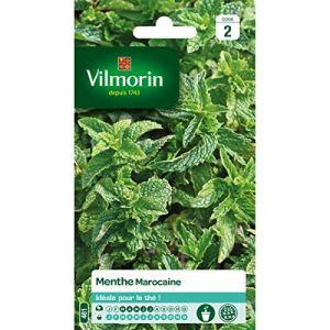 Menthe Marocaine Vilmorin