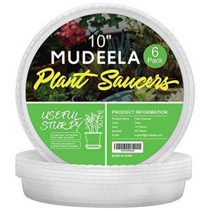 Mudeela Lot de 6coupelles pour pots de plantes d'intérieur en plastique durable transparent