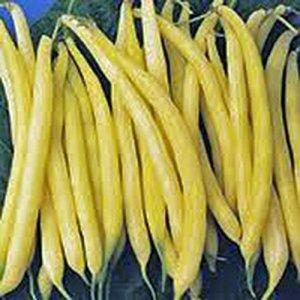 Or Wax Bean, Bush Bean, NON ogm, 20+ organiques graines, Grande dégustation et en bonne santé