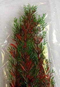 Plante en Plastique Egeria Sp. 47cm / Plante Aquatique Aquarium Artificiel Plante