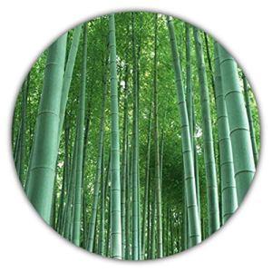 Chinois Bambou Géant (Bambou MOSO) env. 50graines