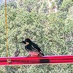YOUPOU Mangeoire à colibri horizontale à suspendre – Mangeoire tubulaire pour colibris – Mangeoire à oiseaux – Tube transparent