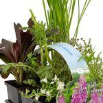 6x Plantes de bassin – Mix STARTER PACK | Plantes aquatiques fleuries et rustiques | Hauteur livraison 5-50cm | Pot Ø 9 cm
