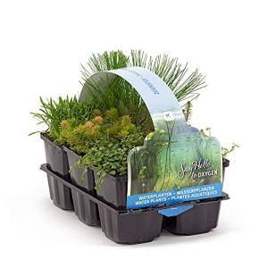 6x plantes d'étang | Mélange de plantes aquatiques