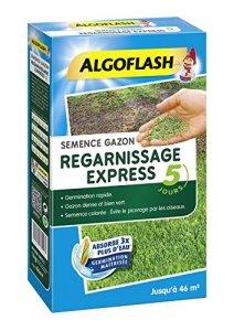 ALGOFLASH Semence Gazon Regarnissage Express 5 jour, 1 k g, SEMEX1