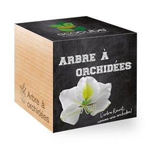 Feel Green Ecocube Arbre À Orchidées, L'Arbre Fleurit Comme Une Orchidée, Idée Cadeau (100% Ecologique), Grow-Your-Own/Kit Prêt-à-Pousser, Plantes Dans Des Cubes En Bois 7.5cm, Produit En Autriche