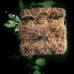 Qagazine Cubes de laine de roche multifonctions, blocs de laine de roche pour culture agricole hydroponique