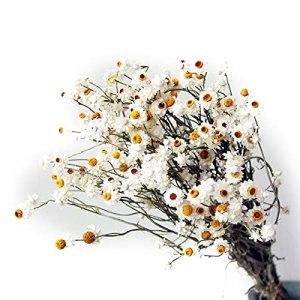 Chrty Bouquets de fleurs artificielles séchées naturelles – Chrysanthème – Décoration de photographie – Accessoires pour magasins, mariage, bouquets de fleurs – Décoration d'intérieur