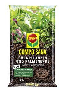 Compo 1143102004Sana grünpflanzen et Palmier Terre, 10L