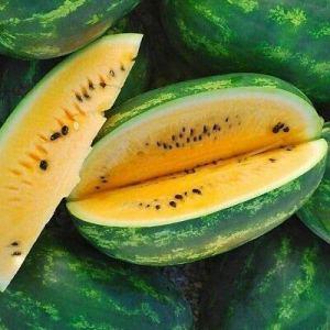 Genipap 20 graines de plantes d'Aloe Vera