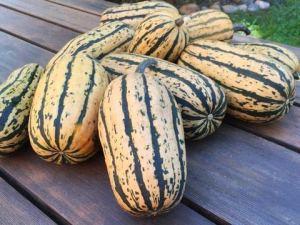 Genipap 25 graines de plantes Delicata SQUASH Sweet Buttery