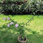 Tuteur de Support de Plante de Jardin en métal pour Plantes grimpantes en Pot, Cadre d'escalade pour Plantes à Fleurs, Treillis de Jardin pour Plantes grimpantes