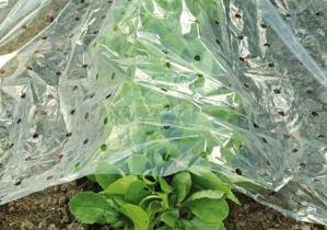 Floraworld Semis Film L 10x b 1,5m, perforé hochtransparent Film pour semis, Plante d'écran, Film, pour Serre Tunnel de Jardin à semis, Culture