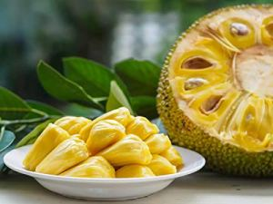 Genipap 10 graines de fruits Jacquier