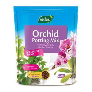 Westland Mélange De Potage D'orchidées