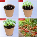 Sfee Lot de 48 pots de tourbe biodégradables et compostables de 6,1 cm pour germination, semis et culture