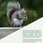 WILDLIFE FRIEND I Mangeoire Écureuil Exterieur – Très Grand – avec Toit en Métal I Distrubuteur de Nourriture Écureuils, Maison Écureuil – Station d'alimentation pour Nourrir Les Écureuils